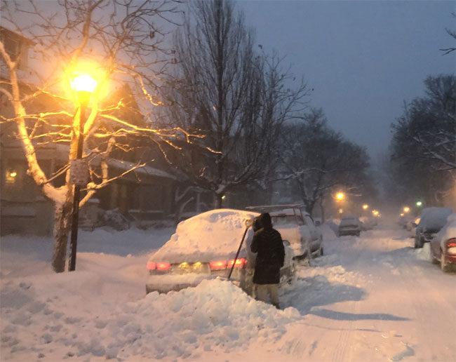 Buffalo under the snow